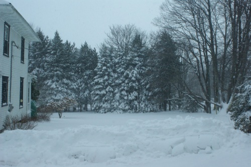 My Snowy Acre of Tree-Walled Lawn